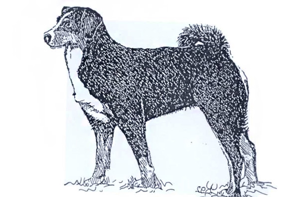 Breed Details The Irish Kennel Club